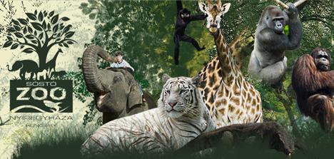 欧洲最好的动物园就在匈牙利  斑马宝宝跨年出生