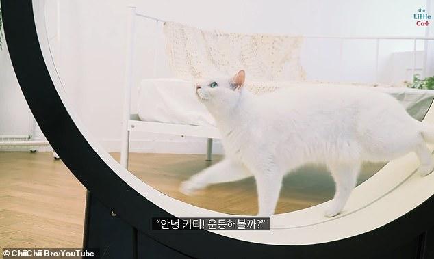 CES 2019:韩企发布猫咪专属跑步机 售价1800美元