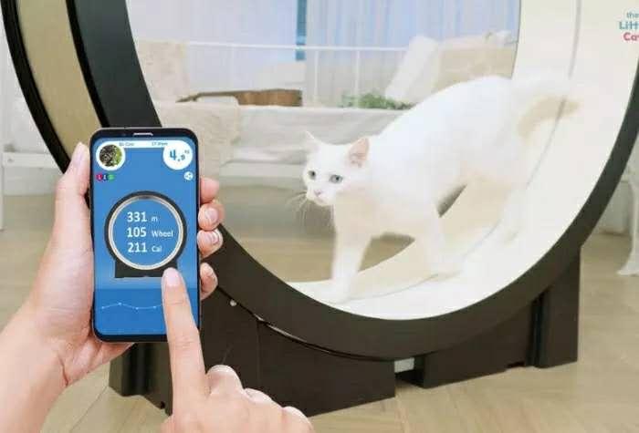 CES2019:猫咪跑步机Little Cat,让你家肥猫动起来