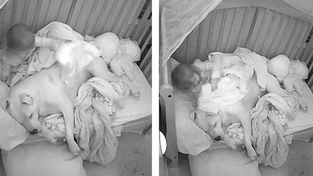 暖心或危险?美国小女孩与狗同睡引发争议
