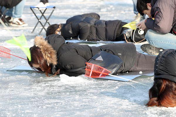 韩国华川山鳟鱼庆典正酣 民众趴冰上找鱼