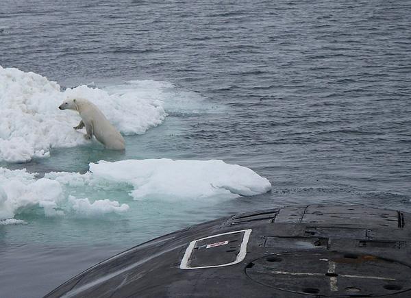 俄潜艇浮出海面倾倒垃圾偶遇北极熊攀爬觅食