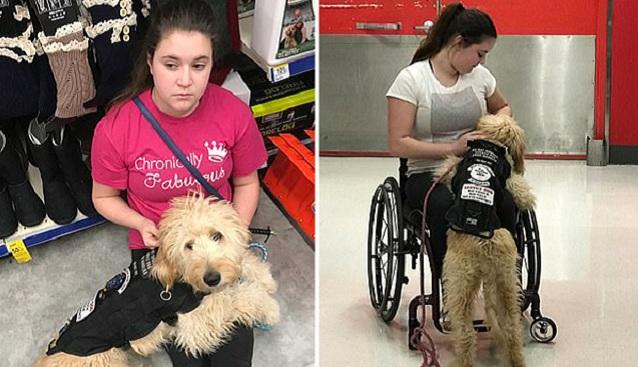美国一过敏少女靠受训宠物狗一次次脱离险境