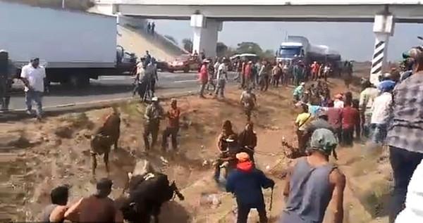 墨运牛车与偷渡车相撞 居民抢牛当街宰牛场面血腥