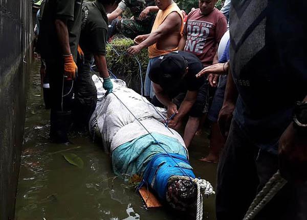 惨剧!印尼一女科学家投喂鳄鱼时被鳄鱼活吞