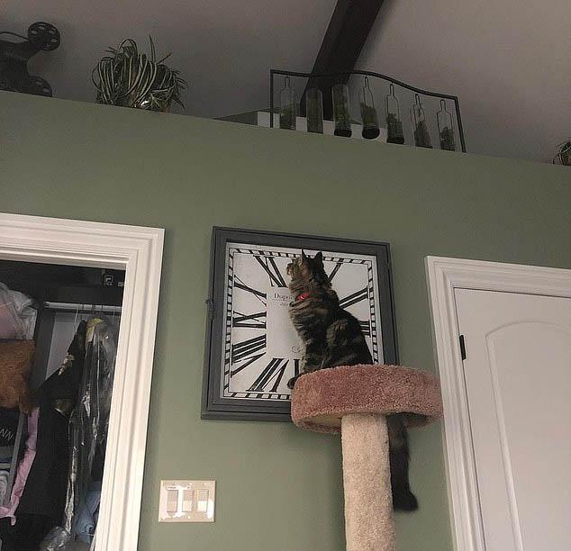 土豪猫!美国两猫独享月租万元公寓
