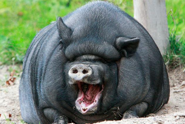 我胖我骄傲!围观胖的不忍直视的动物们