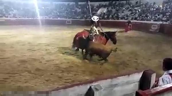 公牛发狂顶伤斗牛士胯下骏马并伤及四人被射杀