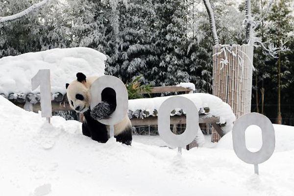 """中国""""熊猫CP""""在韩人气旺 累计观赏人数达700万"""