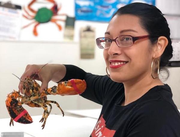 美海鲜商贩发现极珍稀斑纹龙虾转赠水族馆