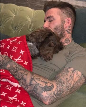 贝克汉姆爱犬盖4万元毛毯引热议 被网友痛斥炫富