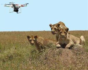动物可能习惯了无人机