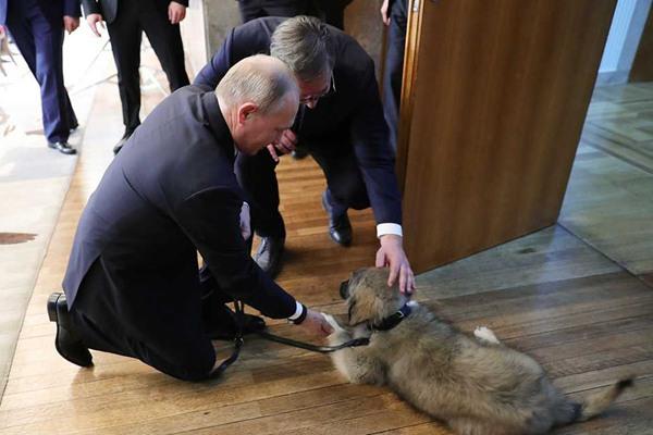普京正式访问塞尔维亚 获总统武契奇赠送一只超萌牧羊犬