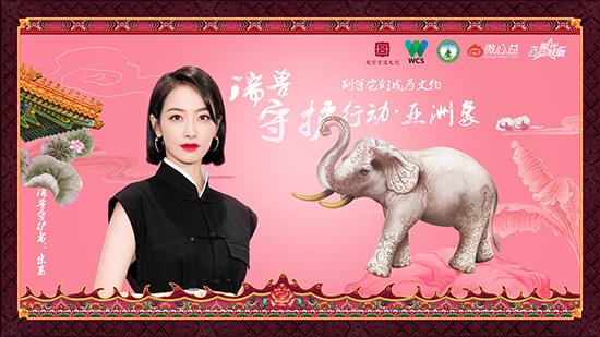 宋茜守护瑞兽亚洲象 关爱濒危野生动物