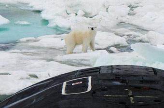 俄罗斯核潜艇在北极遇上北极熊 双方都很淡定