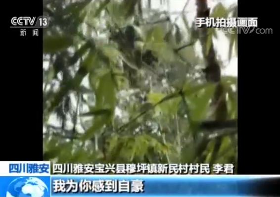 村民偶遇大熊猫边拍视频边聊天 专家:喊话大熊猫不可取