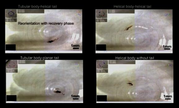 研究人员开发柔性纳米机器人 可在体内运送药物