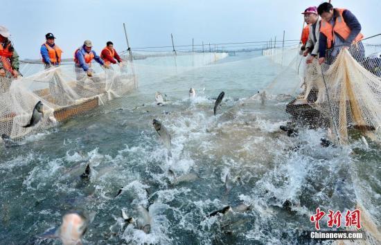 长江流域重点水域禁捕渔民怎么办?农业农村部回应