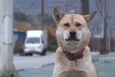 韩国怀孕狗狗不知男友已身亡 每天去老地方赴约