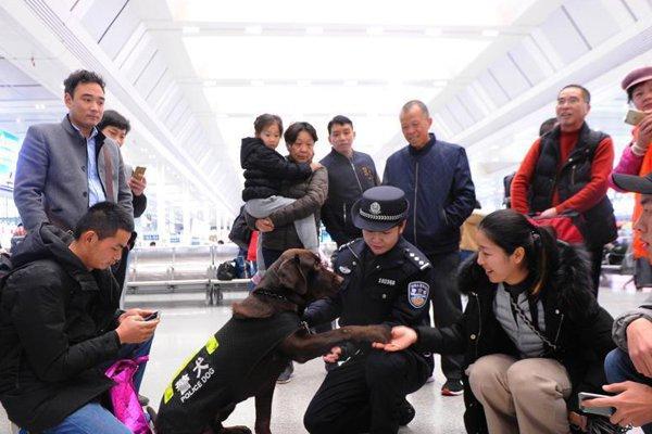 警犬浩克的首个春运 与旅客呆萌互动