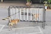 """泰国两狗隔围栏对吼""""不动手"""""""