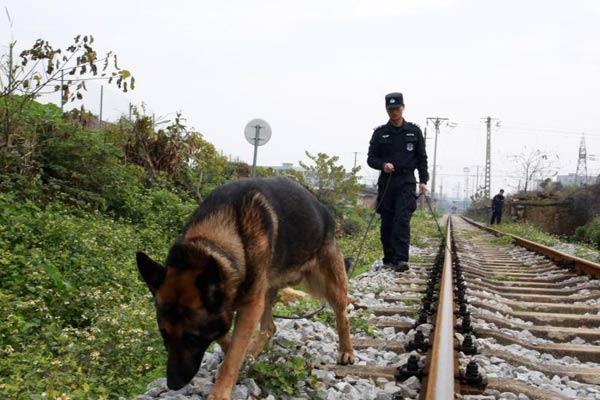 """探访广西带犬民警 既是""""铲屎官""""又是训导员"""