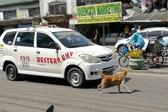 菲律宾一幼犬被撞 母亲奔入车流狂吠求救
