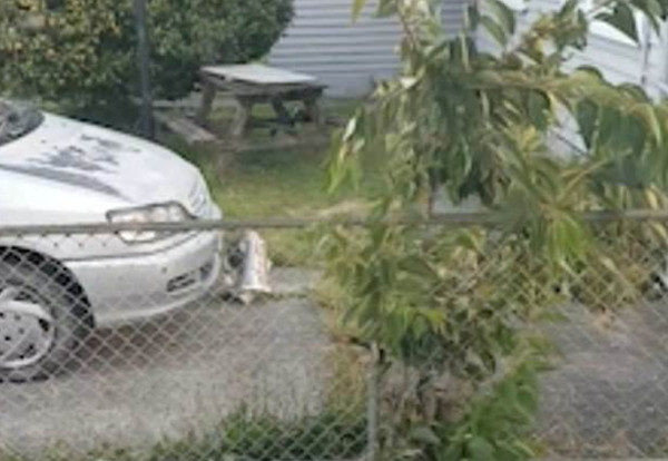 """有图为证!新西兰""""胆大""""猫咪屡次叼走邻居家报纸"""