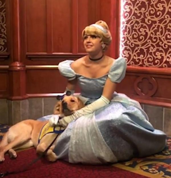 一见倾心!美萌犬迪士尼见到灰姑娘即刻钻其怀里