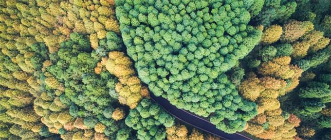 使用无人机的一个优点是,它减少了通过森林砍伐小径以放置毒饵或陷阱
