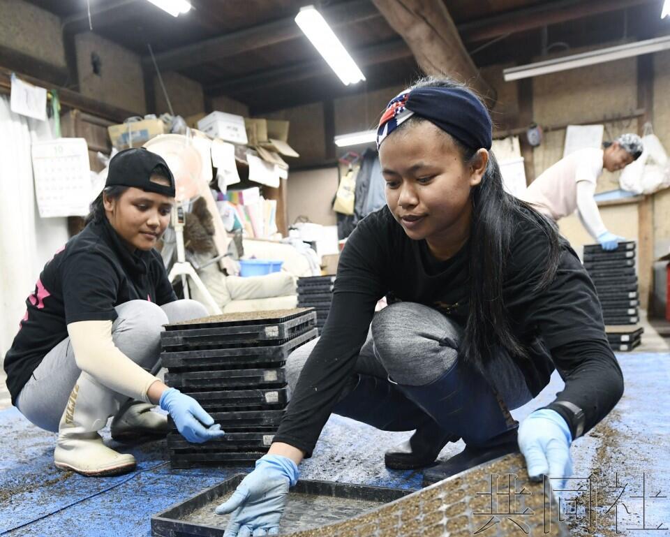 在日外籍劳动者超146万人创新高,中国人最多