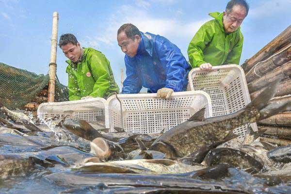 江西峡江:冬捕迎新春