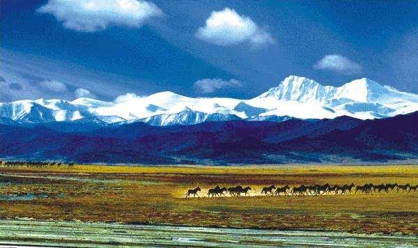 三江源国家公园成为我国大型珍稀物种主要集中分布区