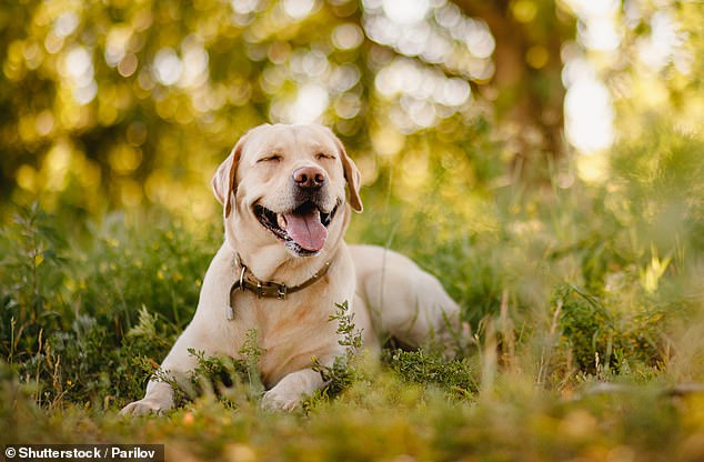 大狗比小狗更聪明 或与脑部大小差异有关