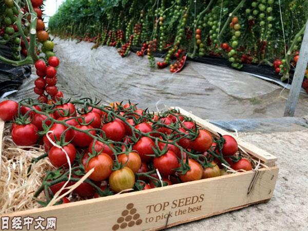 日媒:日本三井物产瞄准全球种子市场