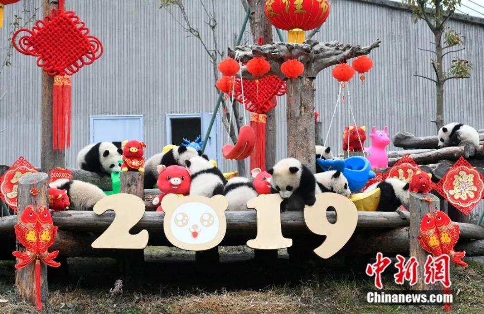拜年就拜年,你们卖什么萌?快来吸大熊猫啦!