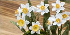 过年在家做一盆仙女级别的水仙花