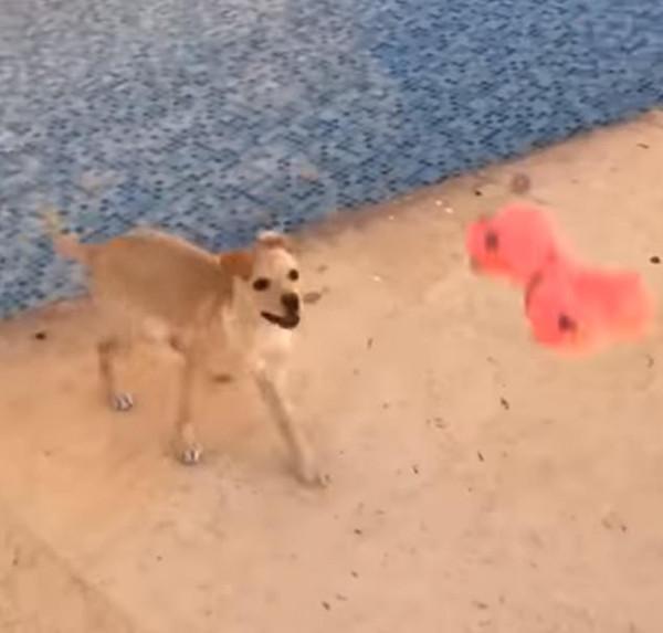 蠢萌!小狗水池中嬉戏不知闯入深水区而滑倒