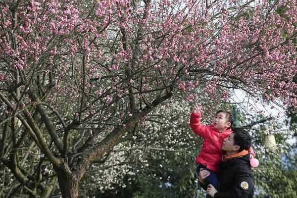 花香迎春来