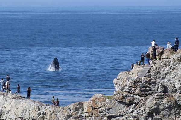 南非旅游部长:南非盼吸引更多中国游客