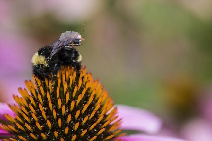 研究人员发现蜜蜂可以做基本的数学运算