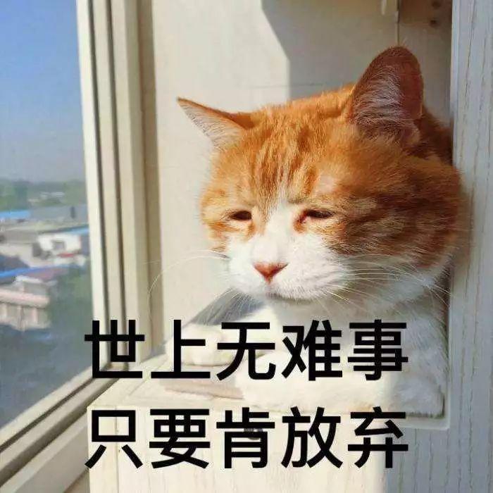 大量日本男生不愿出门,却把小姐姐租到家里来