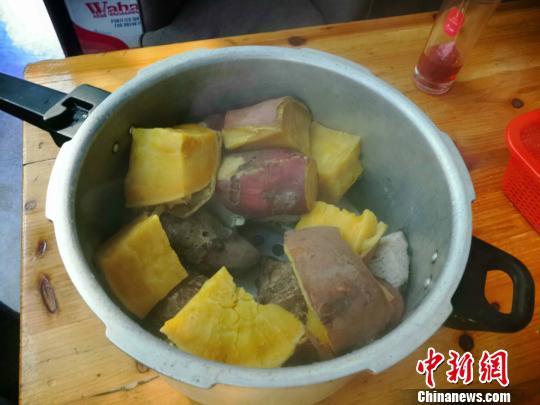 中国侨网番薯 周禹龙 摄