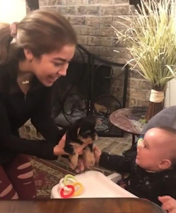 萌爆! 八个月大宝宝见到狗狗后难掩兴奋伸手要抱