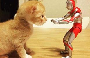 """猫咪和奥特曼的""""甜蜜日常"""""""