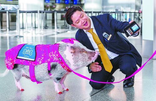 小猪莉萝,旧金山机场春节明星