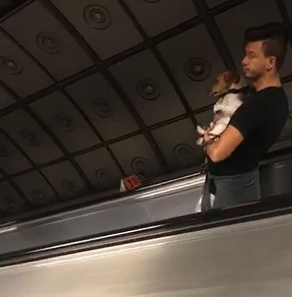小狗乘坐电梯看到电梯台阶逐渐消失 它似乎慌了