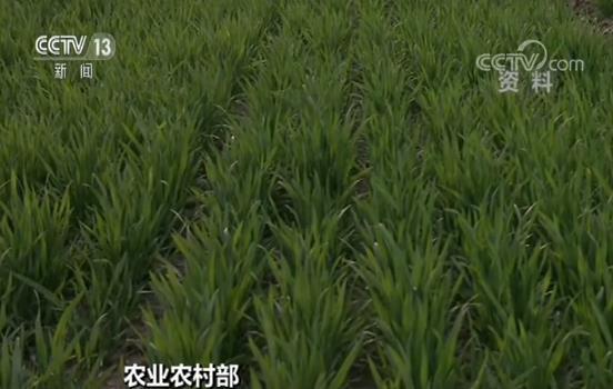 农业农村部:全国春耕备耕工作全面展开