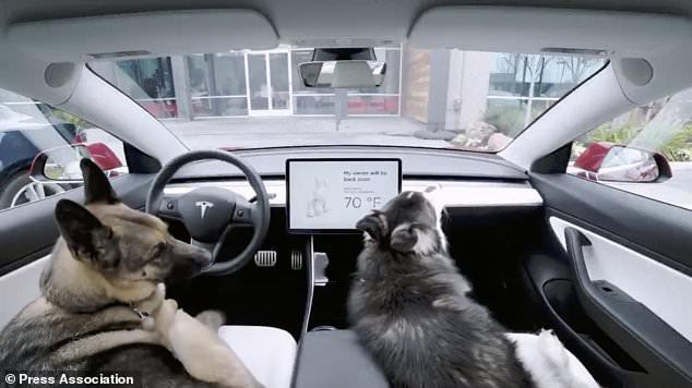 """特斯拉推出""""狗狗模式"""":锁车后仍可保持空调启动"""