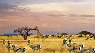 南非盼吸引更多中国游客